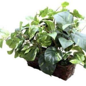 Fake Plant Spy Covert Hidden Camera