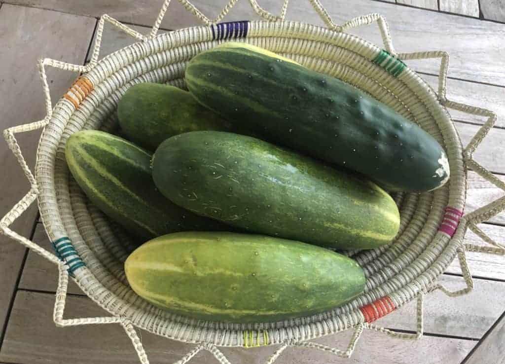 a basket of cucumbers